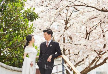 【撮影レポート】4月は釜山も桜の季節です♡桜フォトウェディングはいかがでしょうか?(Studio Vert)